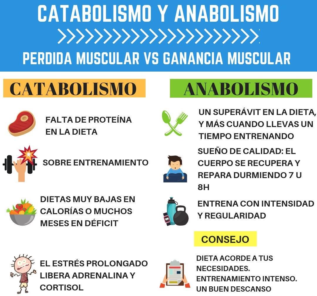 Anabolismo Y Catabolismo Cuadros Comparativos Y Diferencias Cuadro Comparativo